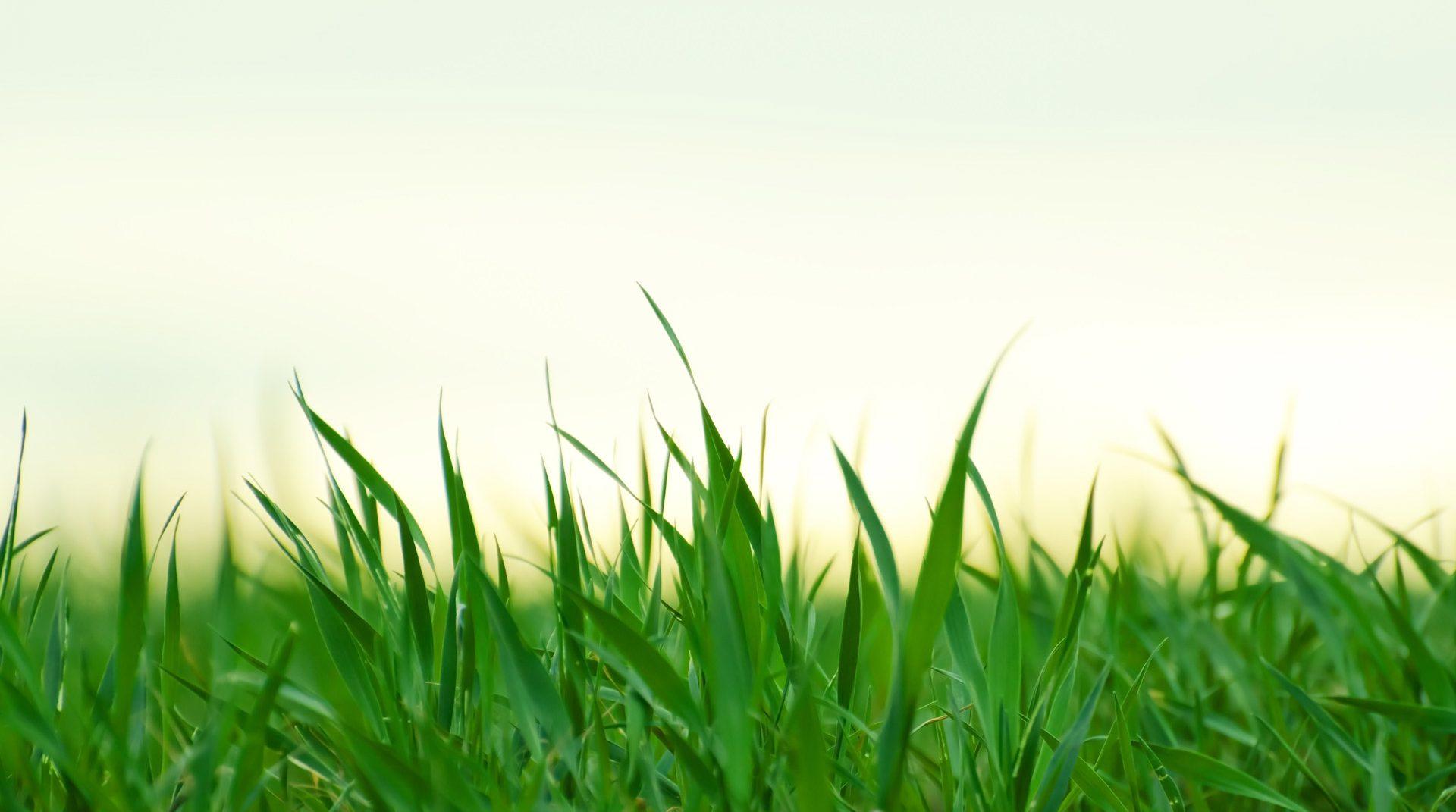 Добре дошли в сайтa за градинарство на Флоримекс България! -